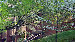 Blooming Dogwoods near Rufner Hall